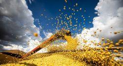 Área de plantio da soja cresce 13,8% em Rondônia e chega a quase 400 mil hectares, aponta Conab